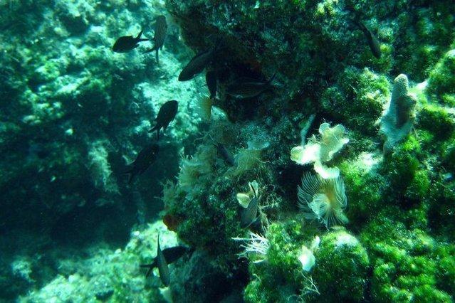 Diving in Cyprus, Akamas Peninsula (Near Paphos) - By Petri Hirvonen