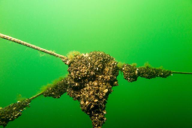 Diving in Netherlands, Zoelen - By Sander Nijdam