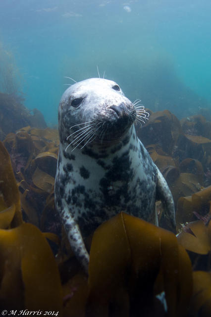 Diving in Falmouth, United Kingdom - By Mark Harris