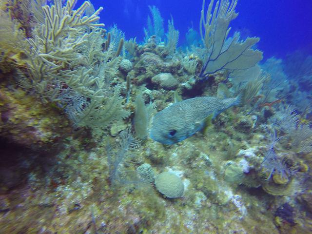 Scuba Dive Shop Living The Dream Divers in Grand Cayman Cayman