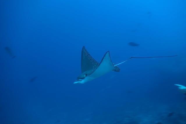 Diving in Maldives, South Ari Atoll - By Sebastien Rezzonico