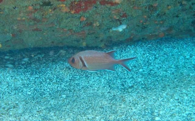 Diving in Netherlands, St. Eustatius - By Niels Schrieken